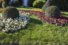 Prato inglese del giardino Fotografia Stock