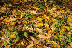 Prato inglese del giardino in autunno Fotografia Stock