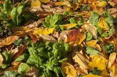 Prato inglese del giardino in autunno Fotografie Stock Libere da Diritti