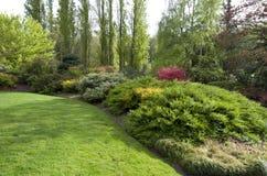 Prato inglese del giardino dopo la pioggia di molla Immagine Stock Libera da Diritti