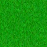 Prato inglese dell'erba verde Immagini Stock
