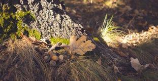 Prato inglese della foresta di autunno Estate di San Martino nel legno Fotografie Stock