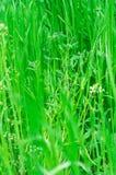 Prato inglese della primavera Fotografia Stock Libera da Diritti