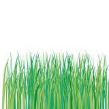 Prato inglese di erba verde Illustrazione Vettoriale