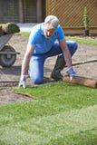 Prato inglese di Laying Turf For del giardiniere di paesaggio nuovo immagine stock libera da diritti