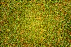 Prato inglese di struttura del fondo dell'erba del campo da golf Fotografia Stock Libera da Diritti