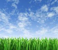 Prato inglese di verde di erba con la priorità bassa del cielo Fotografia Stock