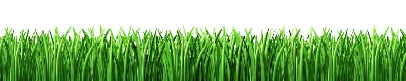 Prato inglese di verde di erba isolato Fotografia Stock