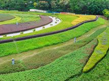 Prato inglese e giardino verdi Fotografia Stock