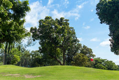 Prato inglese ed alberi verdi Immagine Stock