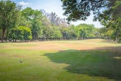 Prato inglese ed alberi verdi con cielo blu in parco pubblico fotografia stock