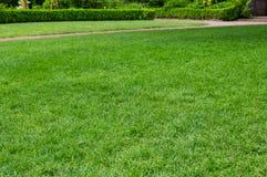Prato inglese erboso verde intenso in un giardino Immagini Stock