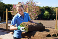 Prato inglese femminile di Laying Turf For del giardiniere di paesaggio nuovo Immagine Stock Libera da Diritti