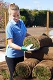 Prato inglese femminile di Laying Turf For del giardiniere di paesaggio nuovo Immagine Stock