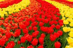Prato inglese fresco con i fiori immagini stock libere da diritti