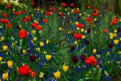 Prato inglese fresco con i fiori fotografia stock libera da diritti