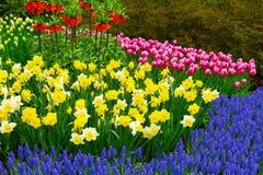 Prato inglese fresco con i fiori fotografia stock