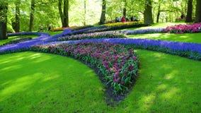 Prato inglese fresco con i fiori stock footage