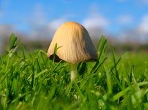 Prato inglese fungoso Fotografie Stock Libere da Diritti