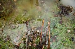 Prato inglese o parco erboso dell'iarda con le pozze nel campo verde con i reflectios Pianta congelata in una pozza con ghiaccio  Immagini Stock