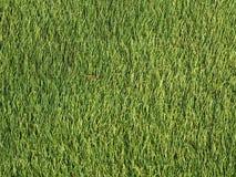 Prato inglese sintetico verde come fondo immagini stock