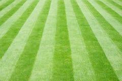 Prato inglese a strisce dell'erba reale fotografia stock libera da diritti