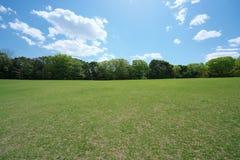 Prato inglese verde circondato dagli alberi in parco Fotografia Stock Libera da Diritti