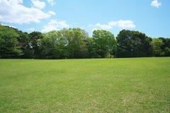 Prato inglese verde circondato dagli alberi in parco Immagine Stock Libera da Diritti