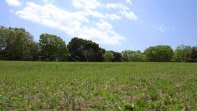 Prato inglese verde circondato dagli alberi in parco stock footage
