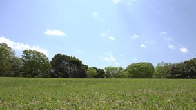 Prato inglese verde circondato dagli alberi in parco archivi video
