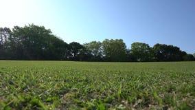 Prato inglese verde circondato dagli alberi in parco video d archivio