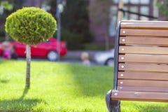 Prato inglese verde con erba luminosa in un parco della città con gli alberi decorativi un giorno di estate soleggiato Bella area Immagini Stock Libere da Diritti