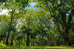 Prato inglese verde con gli alberi in parco immagine stock