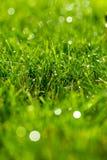 Prato inglese verde del primo piano, fresco e bagnato fotografia stock libera da diritti