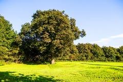 Prato inglese verde e vecchi alberi ai motivi del parco nazionale di Margam, balene immagine stock