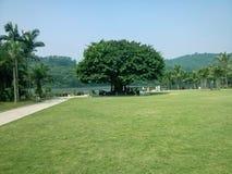 Prato inglese verde nel giardino botanico di xianhu Fotografie Stock