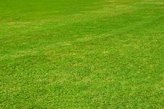 Prato inglese verde scuro del giardino immagini stock