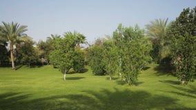 Prato inglese verde tropicale con le palme sul territorio stock footage