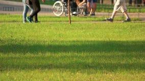 Prato inglese verde in un parco della città video d archivio