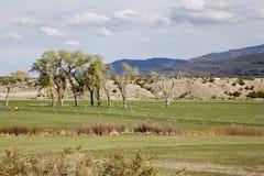 Prato irrigato in valle della montagna fotografia stock libera da diritti