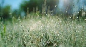 Prato luminoso dell'erba verde di luce solare adatto ad ambiti di provenienza o a w Fotografia Stock Libera da Diritti