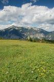 Prato in montagne Fotografia Stock Libera da Diritti