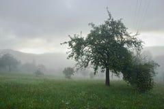 Prato nebbioso con gli alberi Fotografia Stock Libera da Diritti
