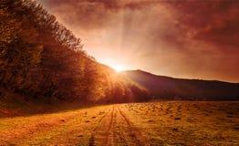 Prato nebbioso fantastico con erba fresca alla luce solare Scena insolita drammatica Immagini Stock