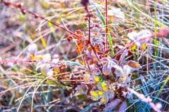 prato nel gelo di mattina Fotografia Stock