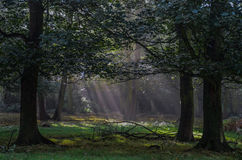 Prato nella foresta Fotografia Stock Libera da Diritti