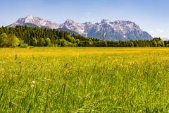 Prato nelle alpi della Baviera Fotografia Stock Libera da Diritti