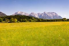 Prato nelle alpi della Baviera Fotografia Stock