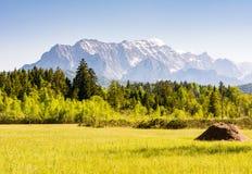 Prato nelle alpi della Baviera Immagini Stock Libere da Diritti