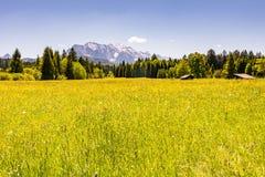 Prato nelle alpi della Baviera Fotografie Stock